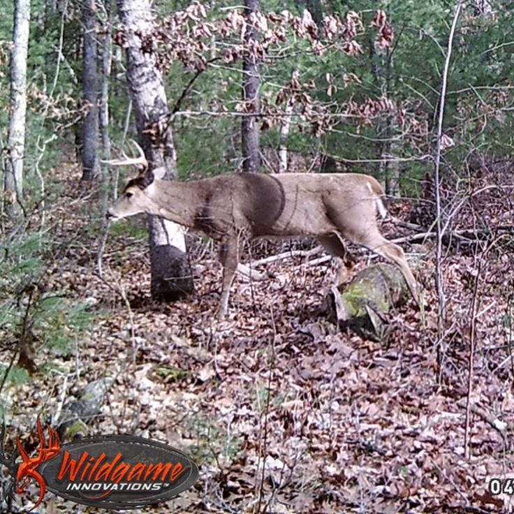 Huntining The Deer Rut In2021 | Calendar Printables Free Blank