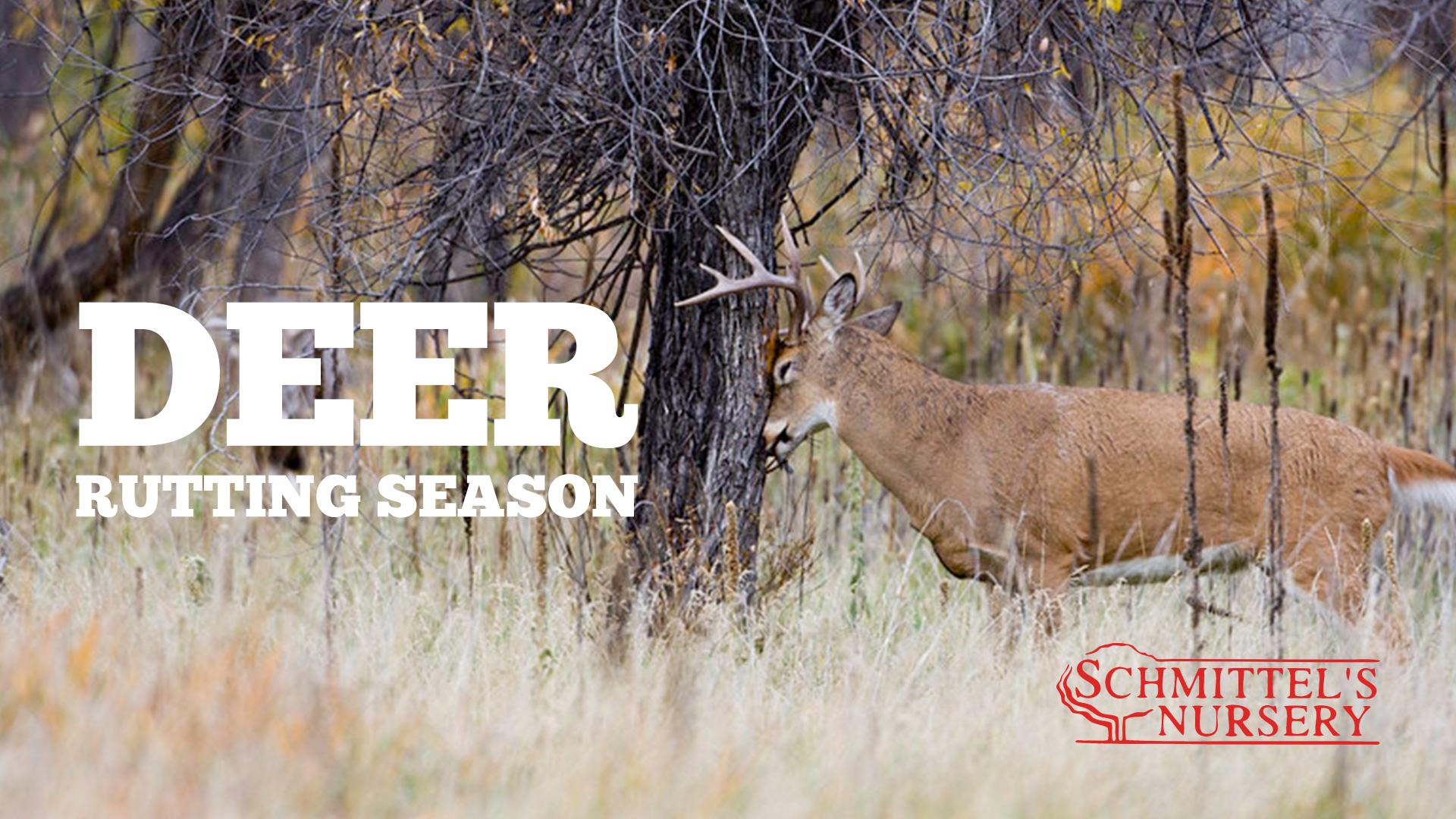 Md Deer Rut 2021 | Calendar Printables Free Blank