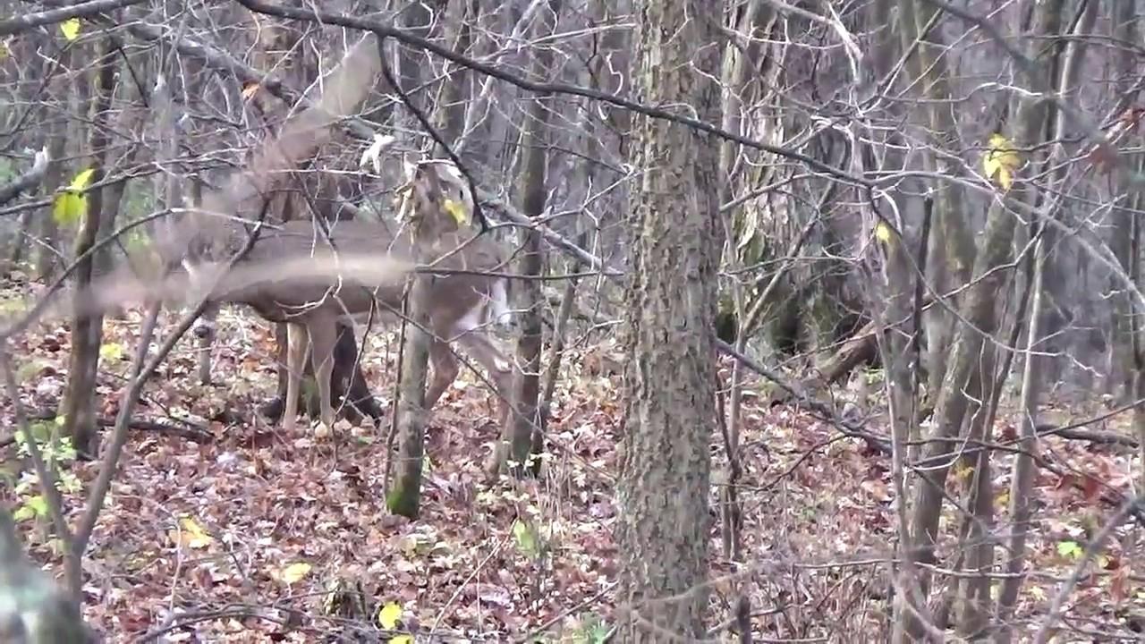 Wisconsin 2021 Whitetail Rutting | Calendar Printables
