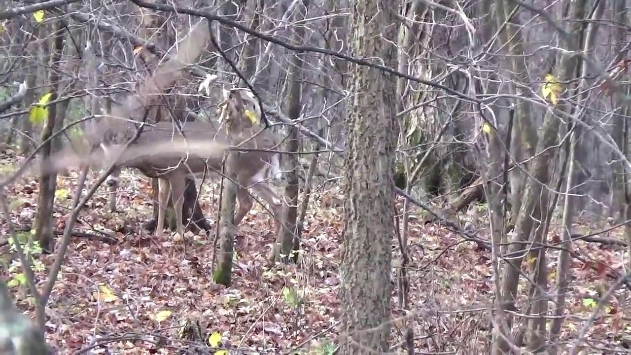 Wisconsin Rut Hunt - Youtube